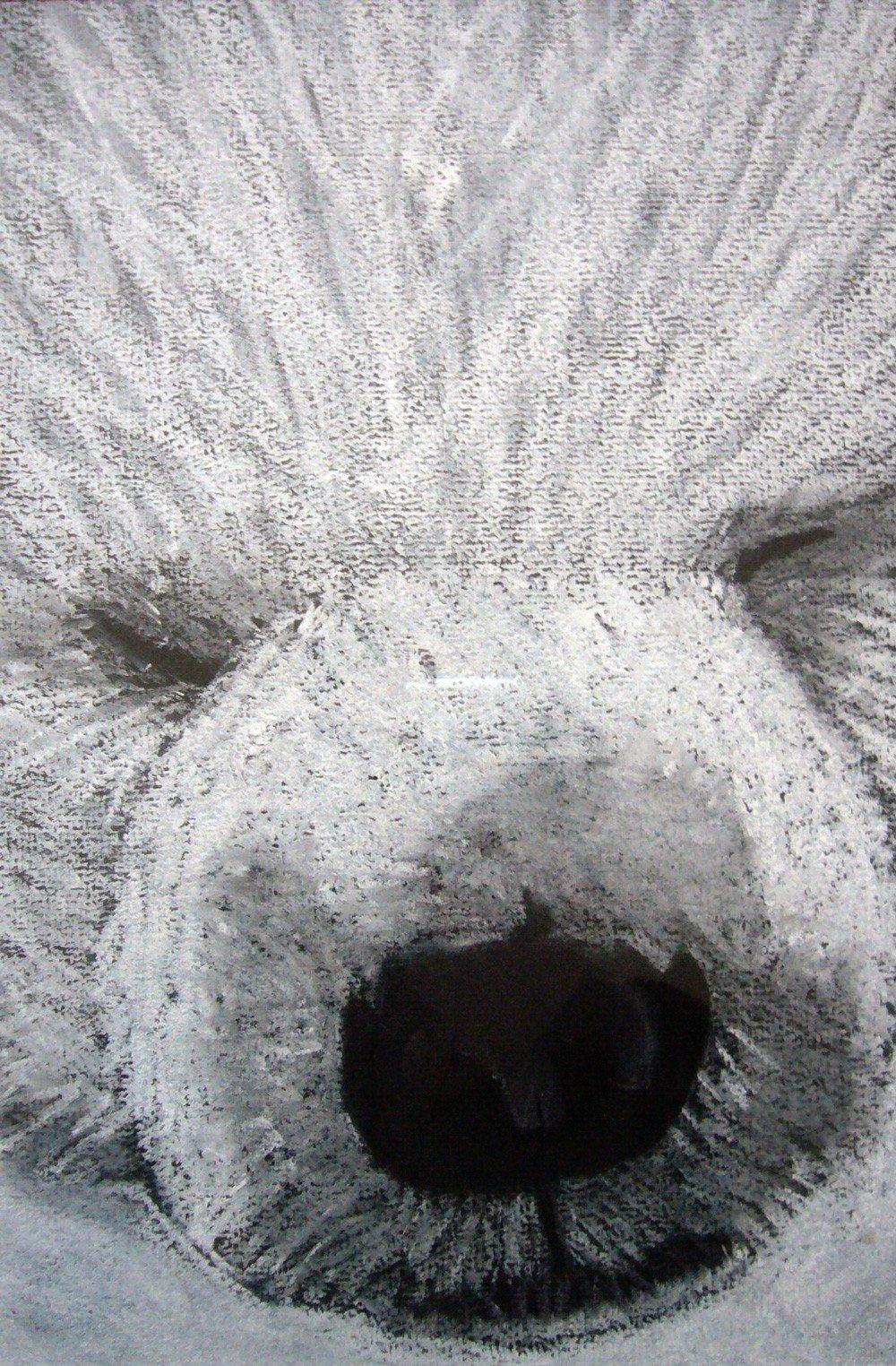 Ours Blanc aux pastels secs par Alice Gerfault