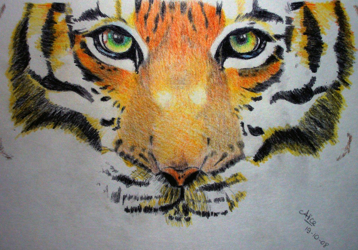 Tigre alice gerfault - Image dessin tigre ...