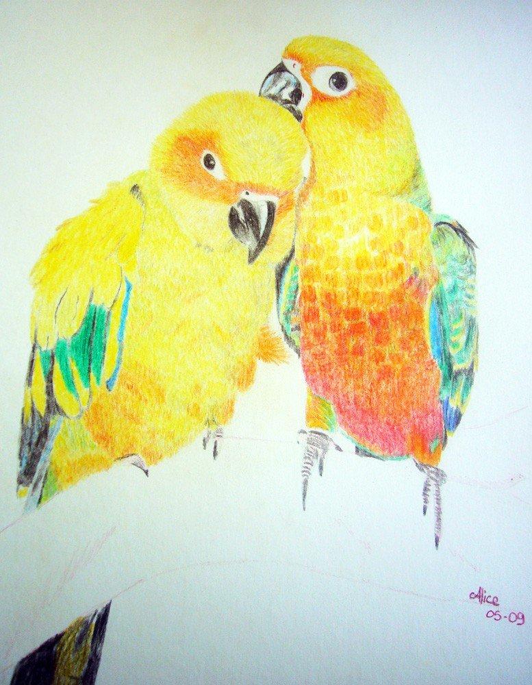 Perroquets Conures aux crayons de couleurs par Alice Gerfault