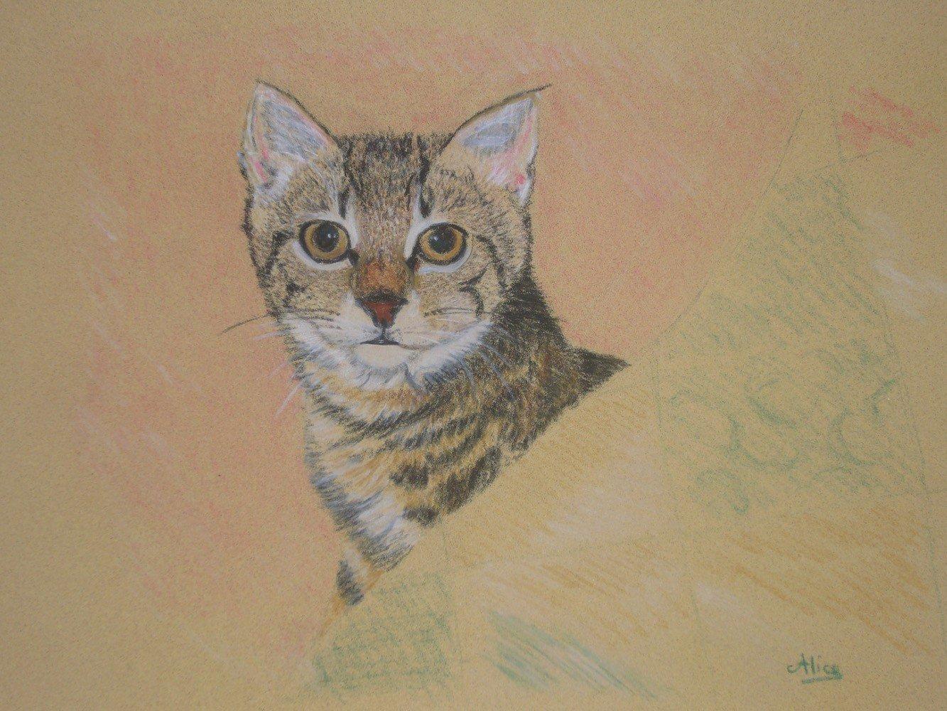 Peanuts le chaton aux crayons pastels par Alice Gerfault