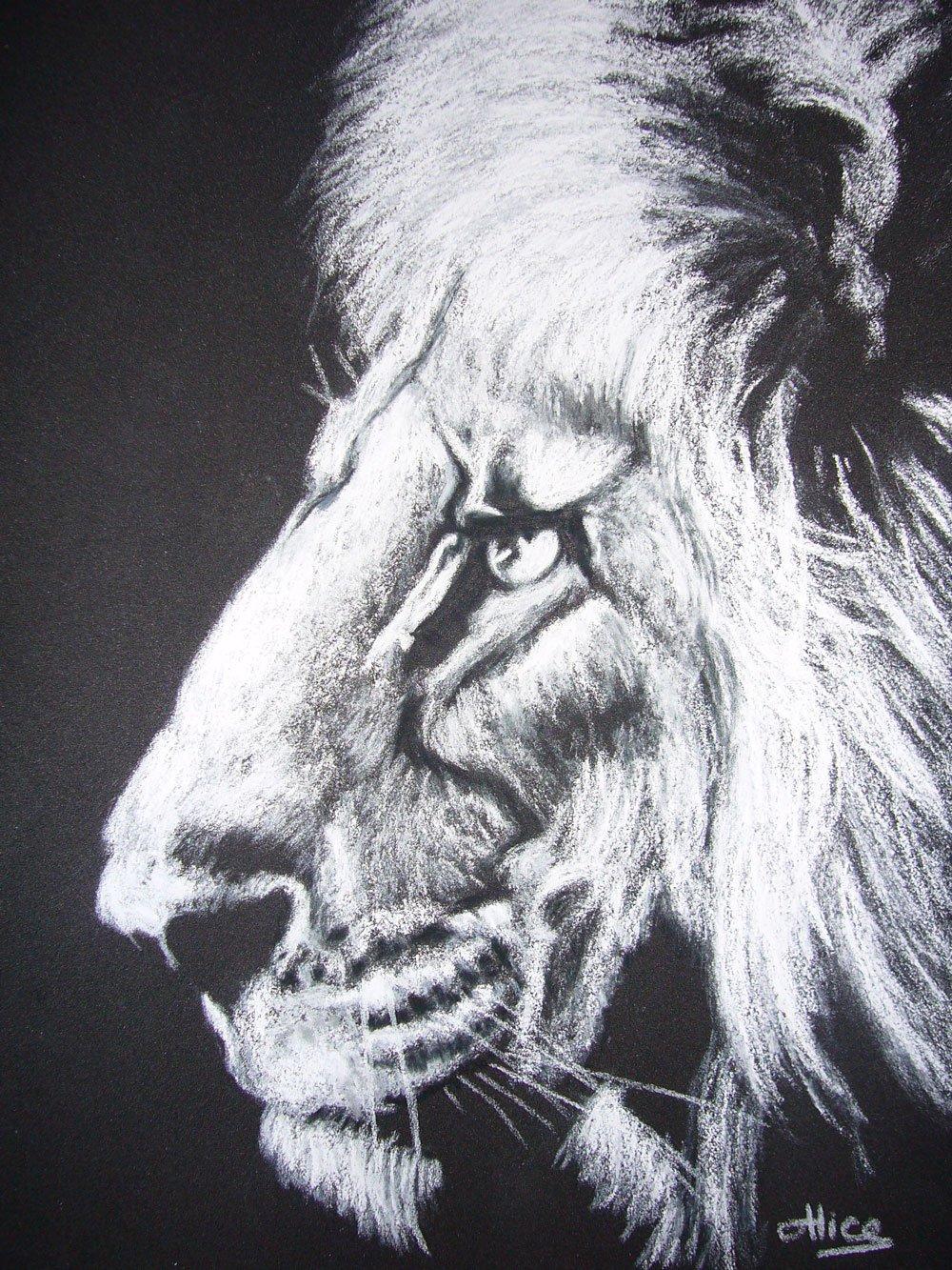 Lion au pastels secs, en noir et blanc, par Alice Gerfault