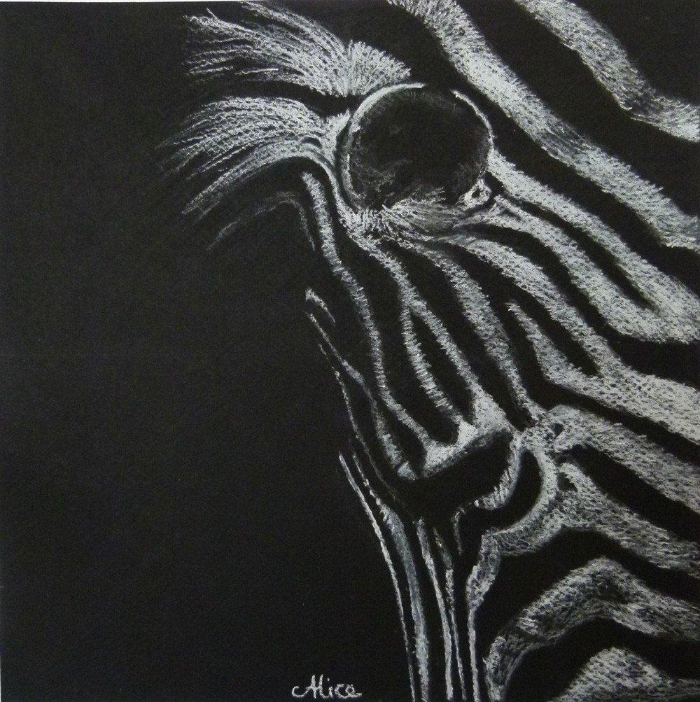zebre, aux pastels secs, par Alice Gerfault